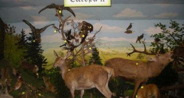 Tiermuseum Pfeifer